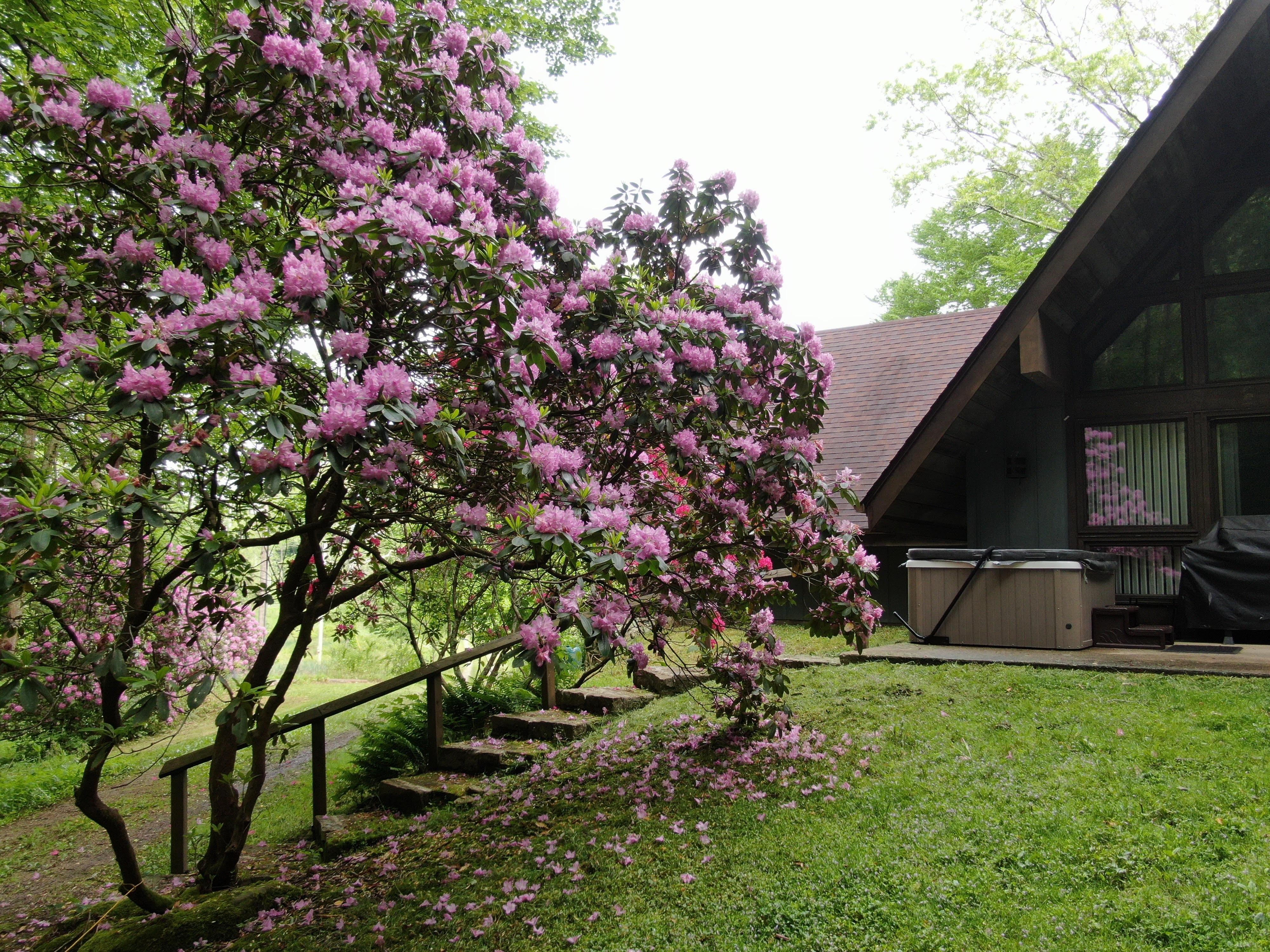 Mercer House - Walk up the steps to Mercer house.