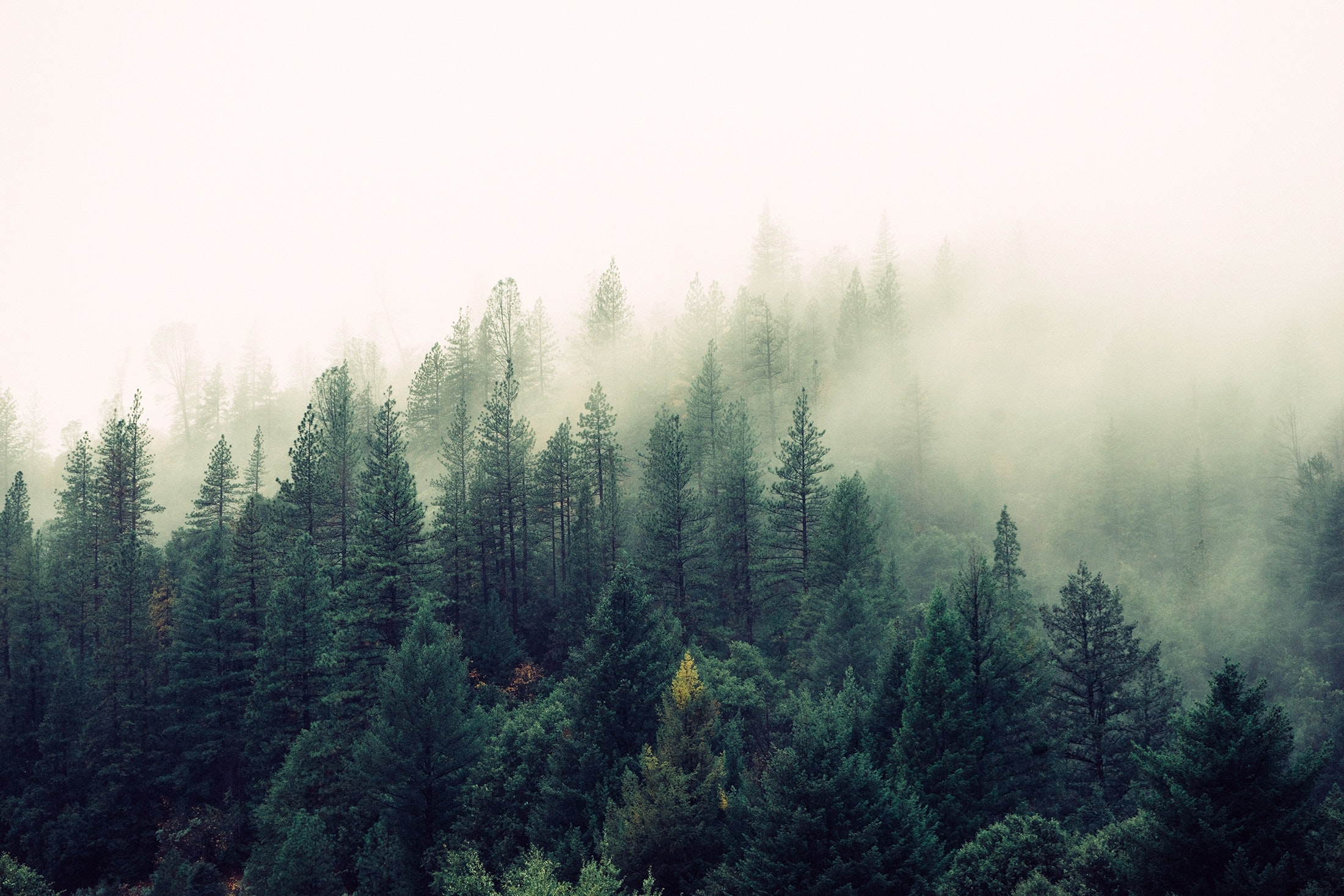 Fog and Trees