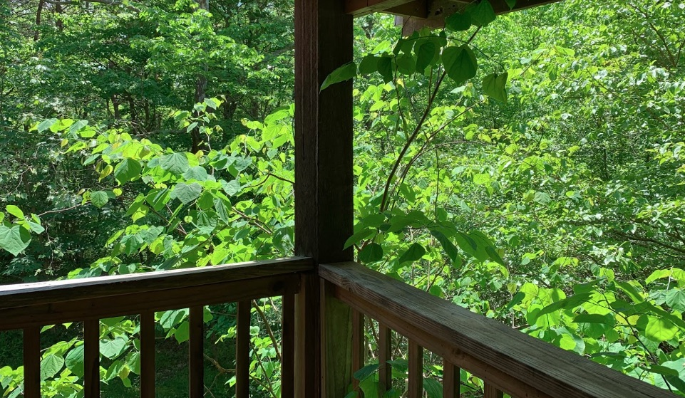 View from Upper Porch - Upper, covered porch accessible from upstairs. Beautiful forest views year-round!